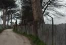 Aversa. Segnalazione del cittadino: albero pendente in via dell'Industria