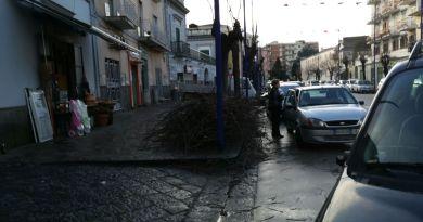 Aversa. Segnalazione cittadino: alberi ridotti come scheletri