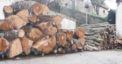 Padula. Tagli furtivi di legna: denunciate 4 persone e sequestrati 20 quintali