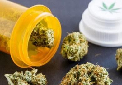Cannabis a uso medico, ok dell'Olanda a maggiori scorte