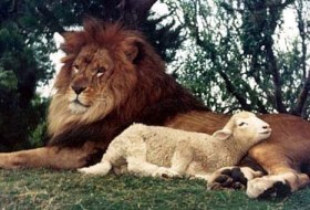 REMINDER: LIONs for LAMBs Poll