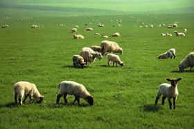 The Film Pasture: Grazing with Podcasters.