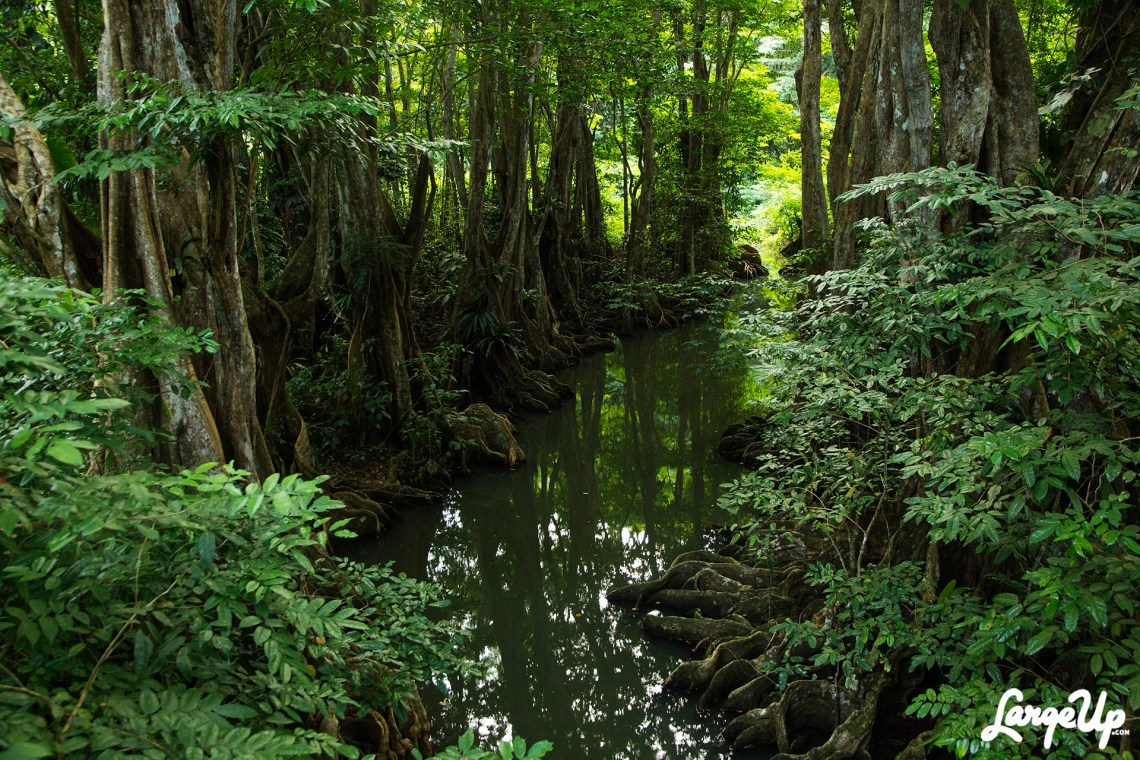 dominica-roots-river-1