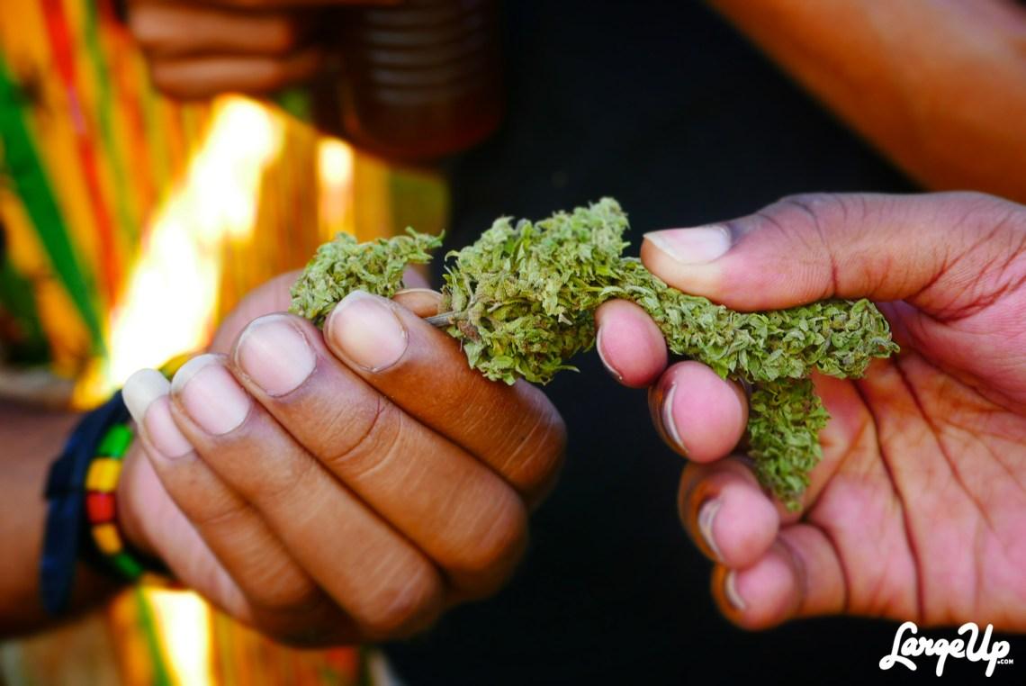 jamaica-cannabis-cup-7