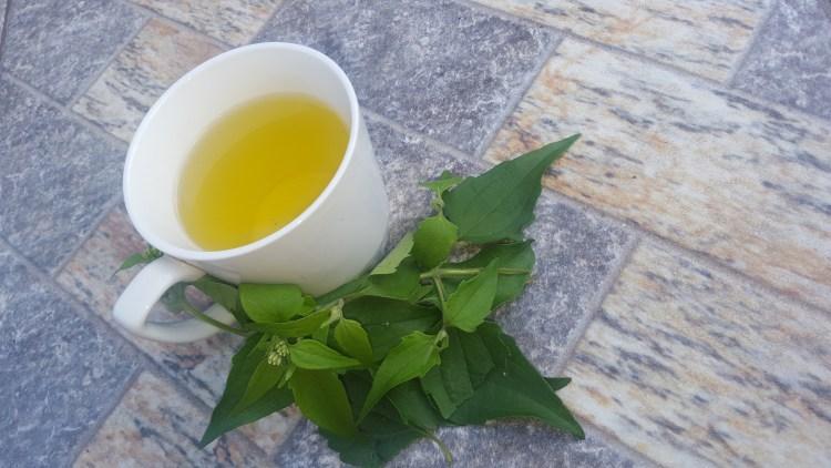 bush-medicine-trinidad