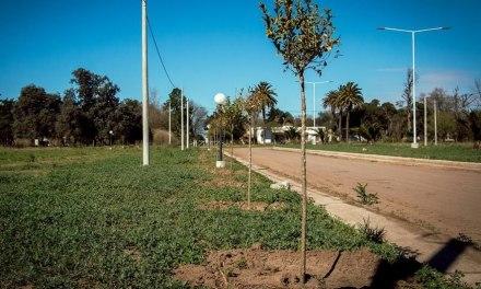 Plan de forestación en General Deheza