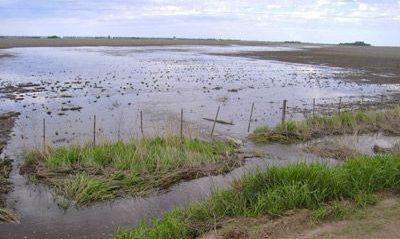 Arias: se realizó un drenaje para evacuar los excedentes hídricos