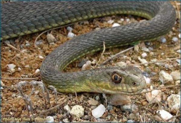 Τρόμος στο Βόλο: Φίδι σουλατσάριζε στο κέντρο