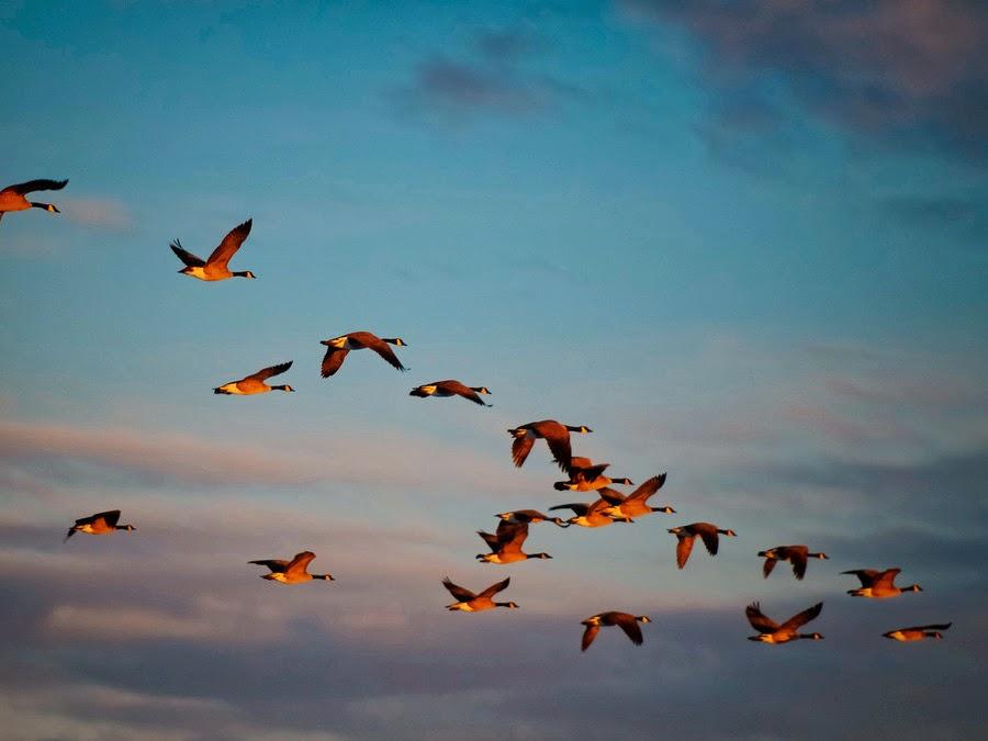 Τροχαίο ατύχημα λόγω… πουλιών [pics]