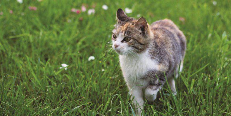 Κορονοϊός: Έκτο επιβεβαιωμένο περιστατικό με γάτα
