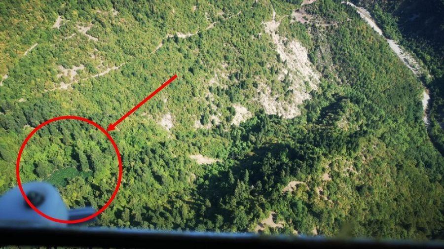 Δύο φυτείες κάνναβης εντοπίστηκαν στα ορεινά της Καρδίτσας - 4 συλλήψεις - 42 άτομα σε δύο δικογραφίες (+Φώτο +Βίντεο)