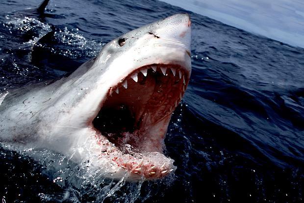 Οι καρχαρίες προτιμούν να τρώνε άντρες!