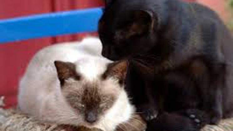 Αφαίρεσαν 15 γάτες από διαμέρισμα Λαρισαίας