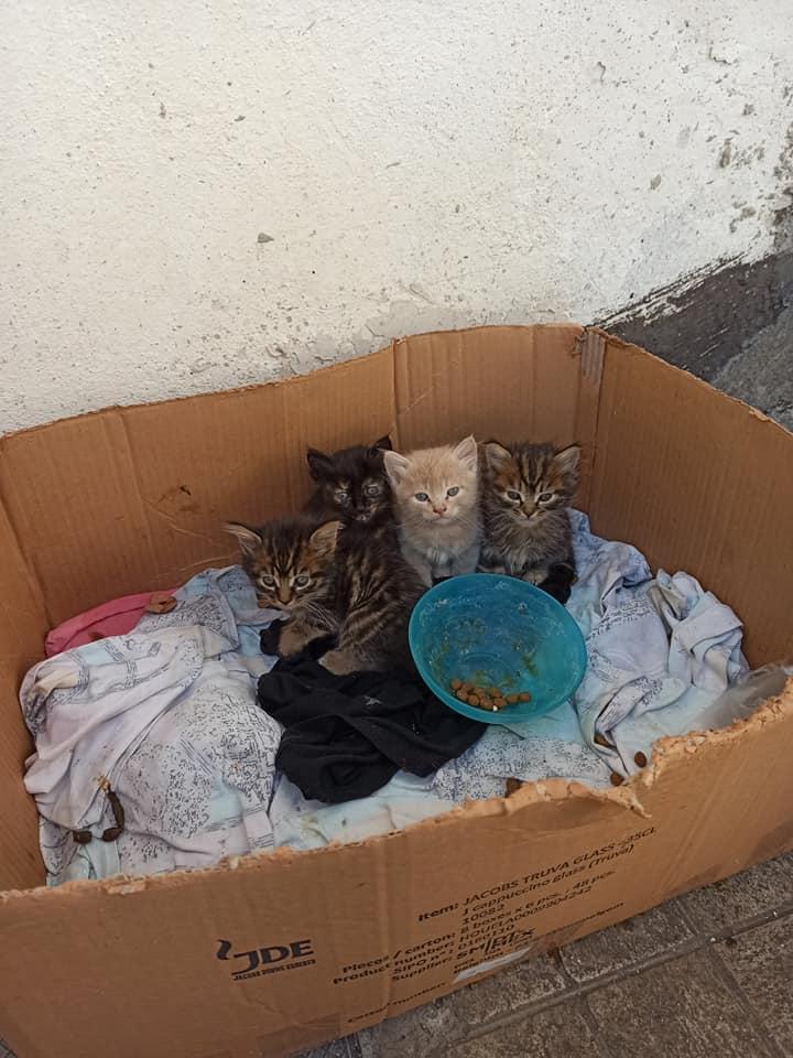 Ενοικιαστές ταϊζουν γατάκια σε ακάλυπτο πολυκατοικίας και ιδιοκτήτης διαμερίσματος τους απειλεί με την αστυνομία