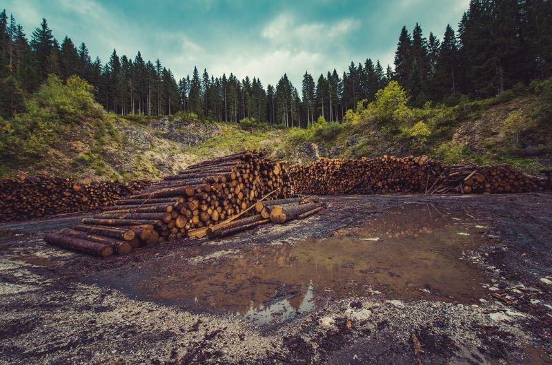 Περιβάλλον για Όλους: Λαθροϋλοτομία, μια σημαντική απειλή για τα δάση
