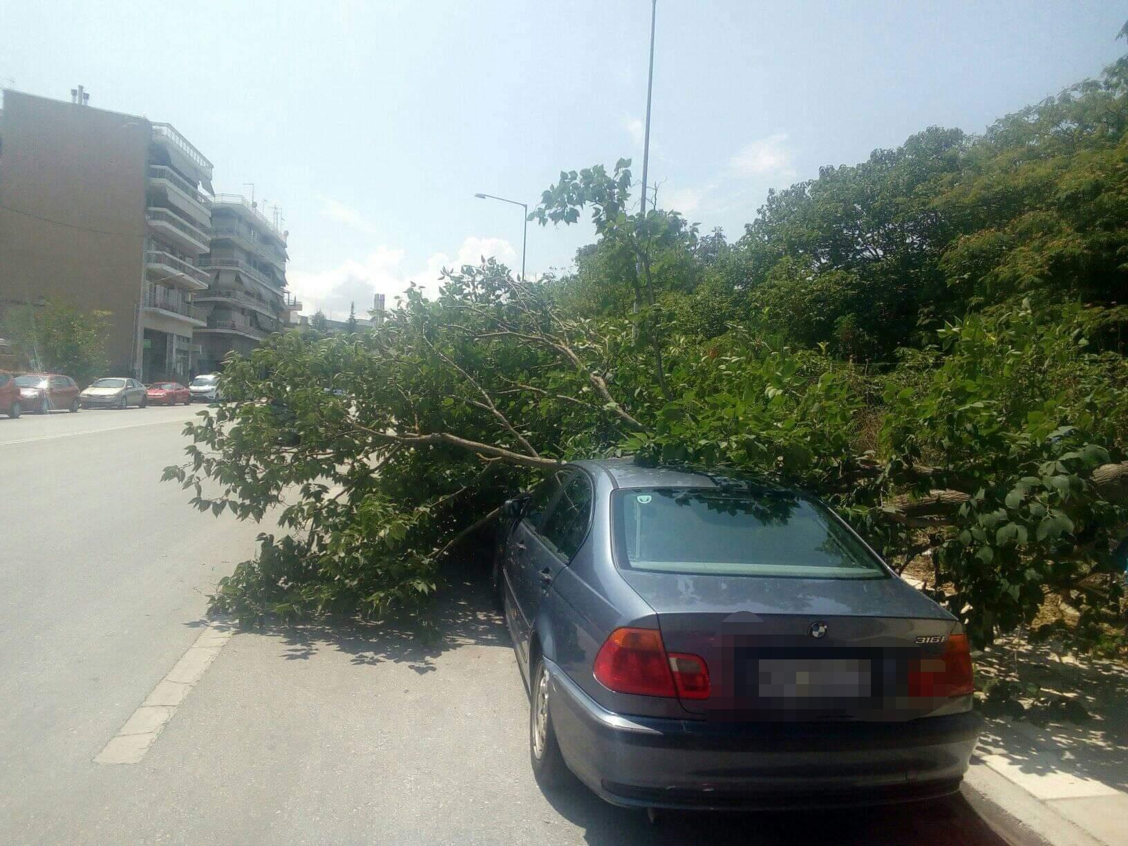 Λάρισα: Δέντρο έπεσε στα καλά καθούμενα πάνω σε αυτοκίνητα - ΦΩΤΟ