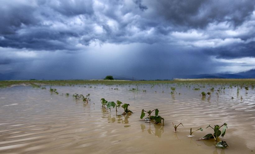 Τακούδης: Έρχονται βροχές ευεργετικές για τις καλλιέργειες στον κάμπο την πρώτη εβδομάδα του Αυγούστου