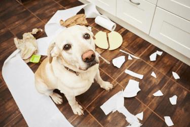 Πως θα κάνω το σκυλάκι μου να μη τρώει τα πάντα στο σπίτι μου.