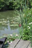Venise-verte-barques-3