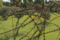 Vestige de la guerre servant de clôture à une oliveraie.
