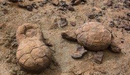Pierres tortues. Recherche de fossiles