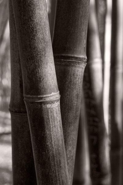 POTD: Three Bamboos