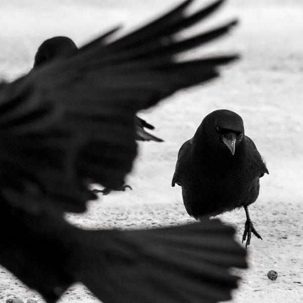 POTD: The Swarm