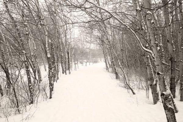 POTD: Snow Envy