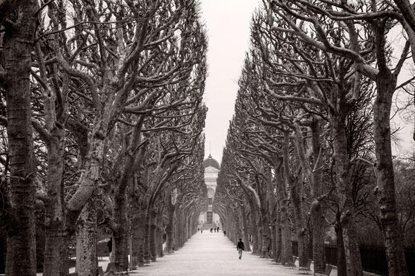 POTD: Mr. Hyde's Trees