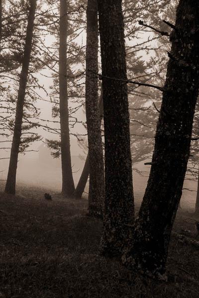 POTD: Spring Fog