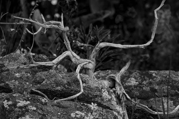 POTD: Sage Lightning