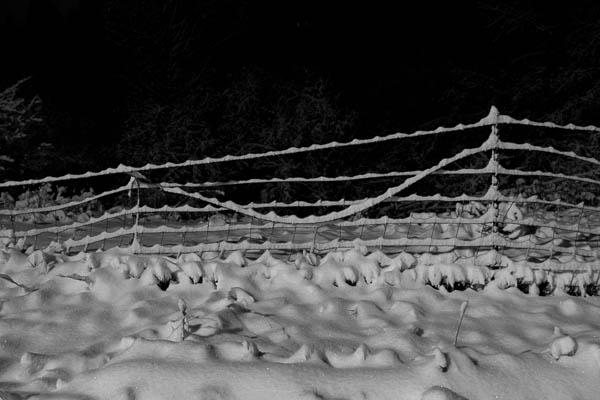 POTD: Wandering Fence