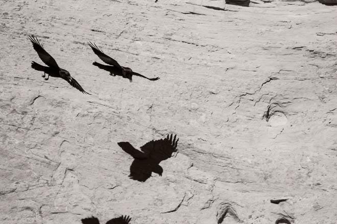 POTD: Shadow Flight