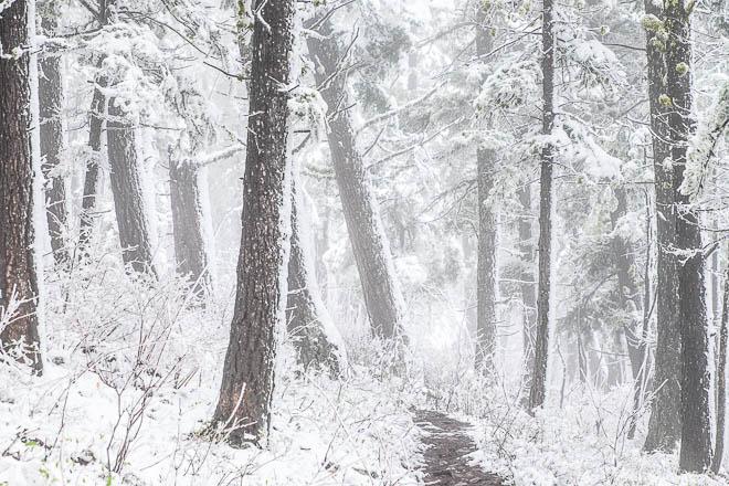 POTD: Spring Hike