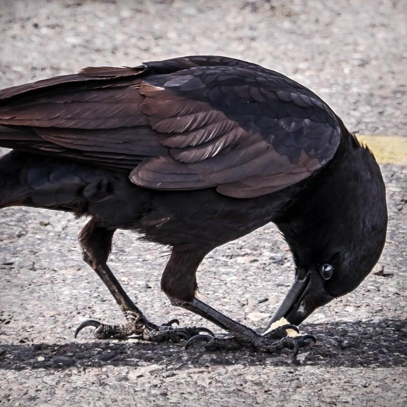 POTD: The Color of Black