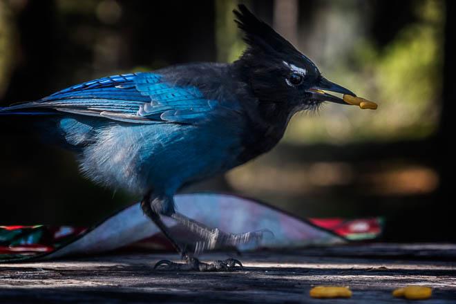 POTD: Blue Meanie