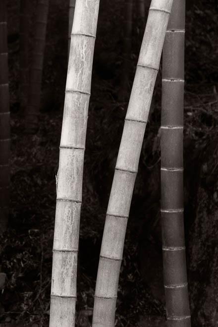 POTD: Bamboo #1