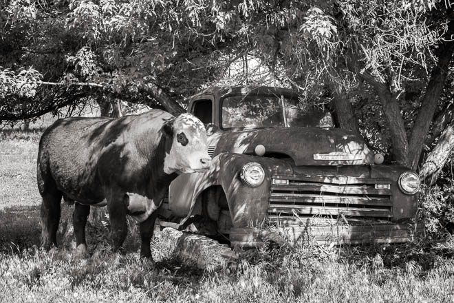 POTD: Parked in the Shade