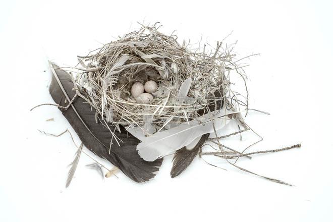 POTD: Empty Nest #1