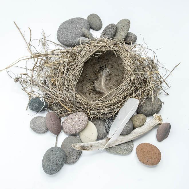POTD: Empty Nest #4