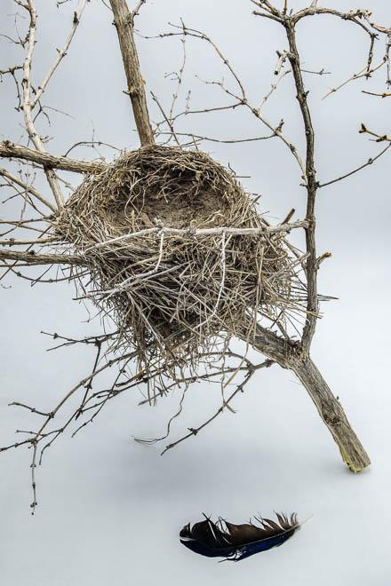 POTD: Empty Nest #7