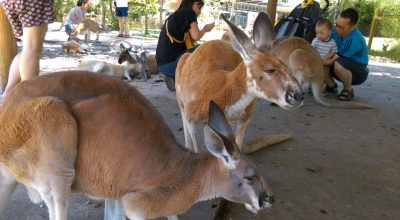 Caversham wildlife park Australië