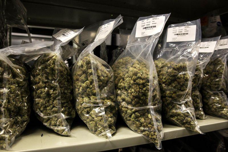 Licencias para cultivo de cannabis en España y quienes la obtienen