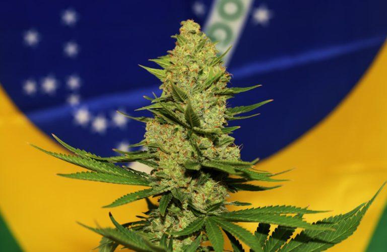 Ecuador y Brasil, países que han legalizado el uso medicinal del cannabis