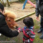 Hof Iggenwarden - Dando de comer a los ponys