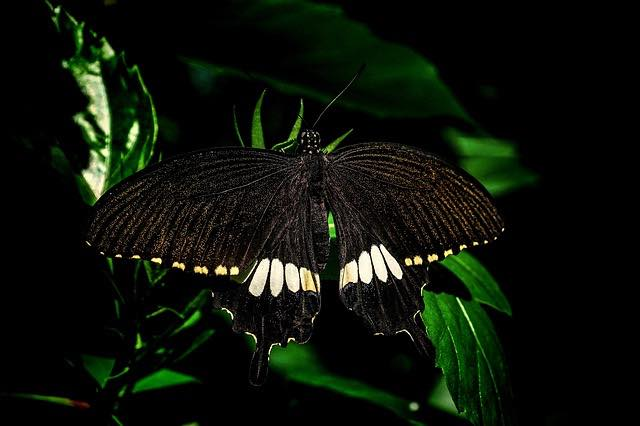 Mi morena Black Witch Mariposa negra