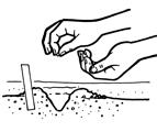 semis - La semence bio