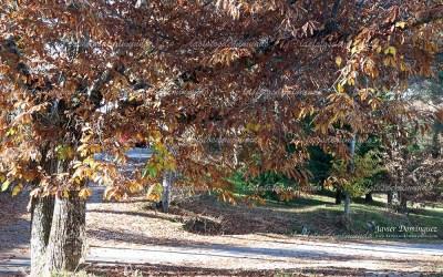 El otoño y sus colores.