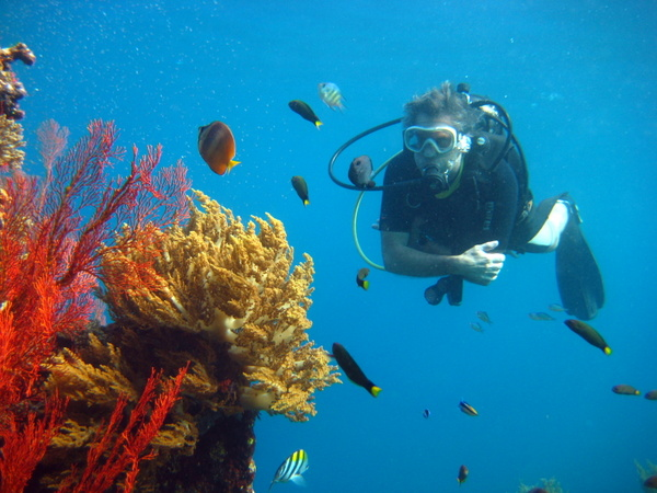 scuba diving on beautiful coral reef