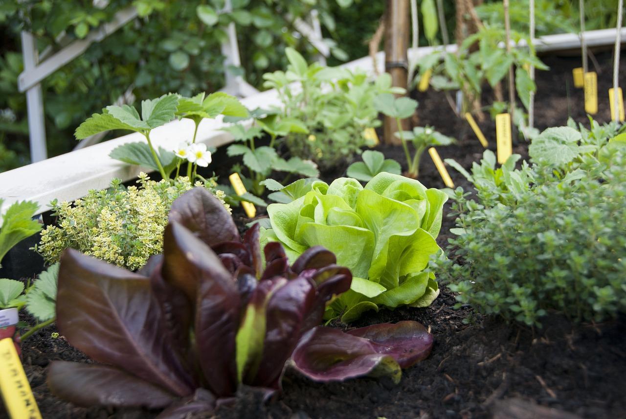 Locavore, consommer local et durable